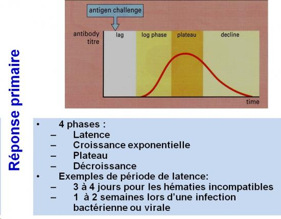 Immunité adaptative humorale 14