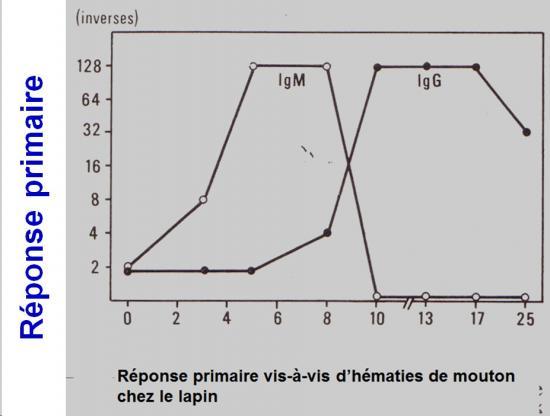 Immunité adaptative humorale 15