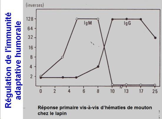 Immunité adaptative humorale 18