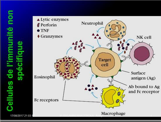 Immunité naturelle 19