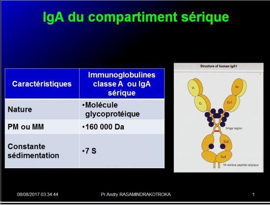 Immunoglobulines 19