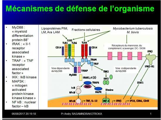 Introduction à l'Immunologie clinique 14