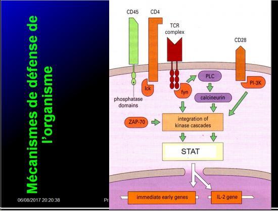 Introduction à l'Immunologie clinique 16