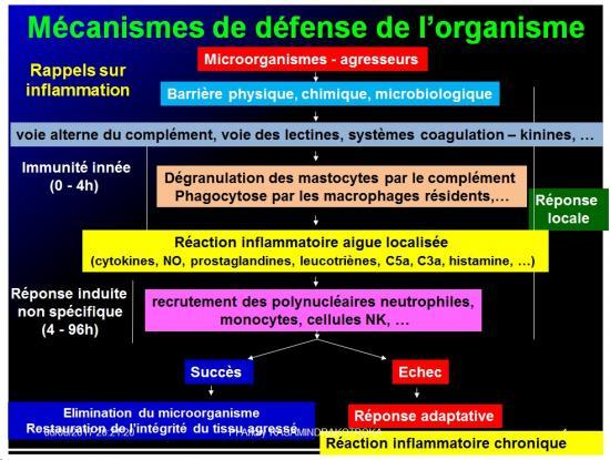 Introduction à l'Immunologie clinique 17