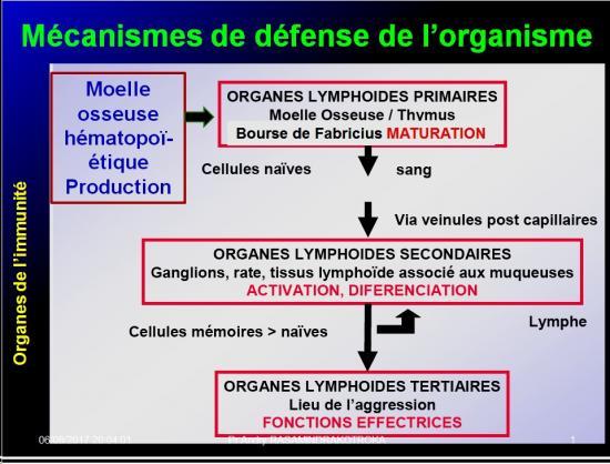 Introduction à l'Immunologie clinique 3