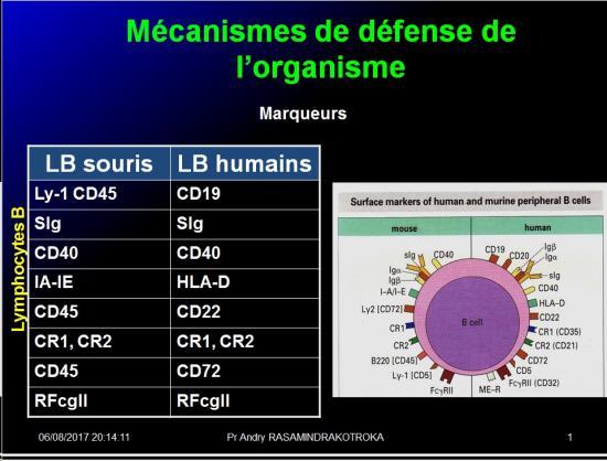 Introduction à l'Immunologie clinique 8