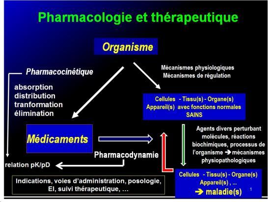 Introduction à la pharmacologie 11