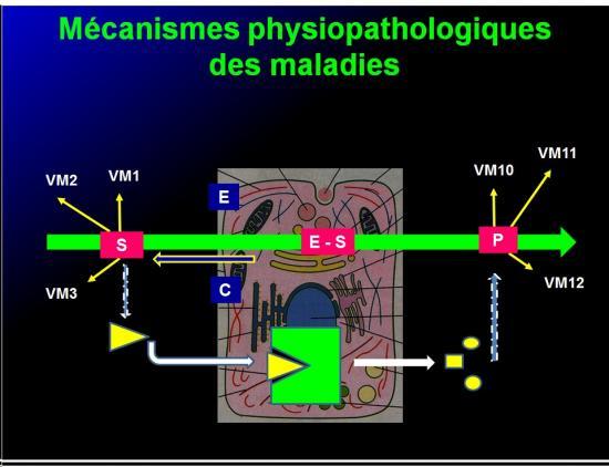 Introduction à la pharmacologie 6