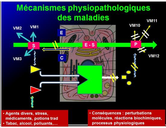 Introduction à la pharmacologie 8