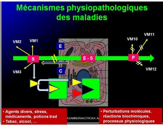 Introduction à la pharmacologie 9