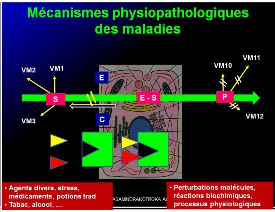 Introduction à la Pharmacologie spéciale 6
