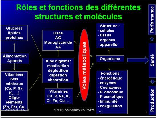 Introduction structures et fonctions des biomolécules 10