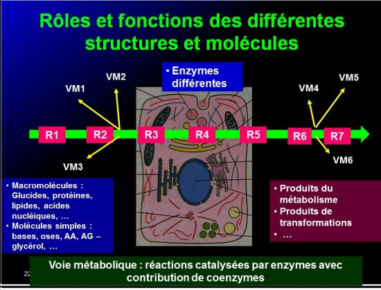 Introduction structures et fonctions des biomolécules 7