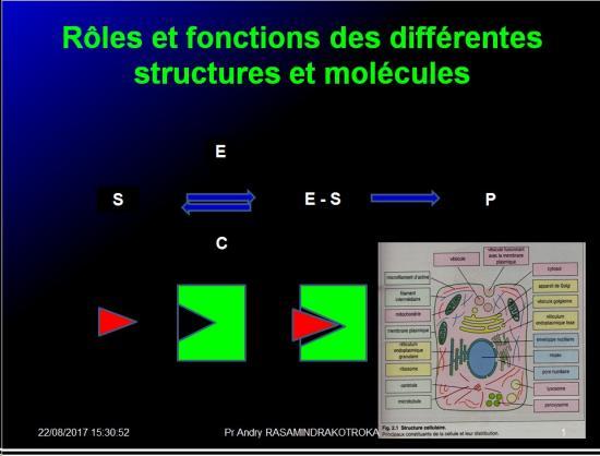 Introduction structures et fonctions des biomolécules 8