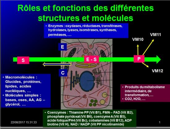 Introduction structures et fonctions des biomolécules 9