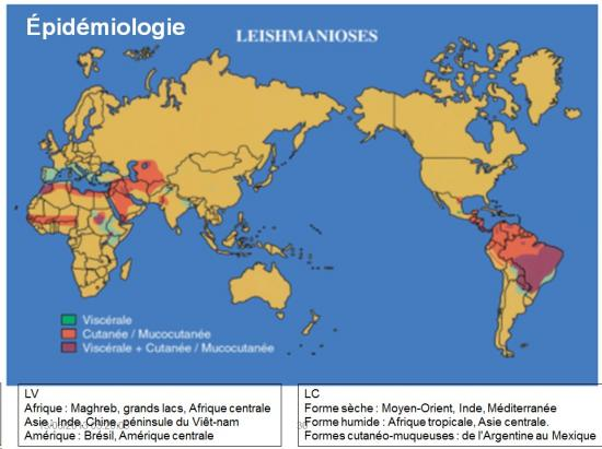 Leishmania et leishmaniose 5