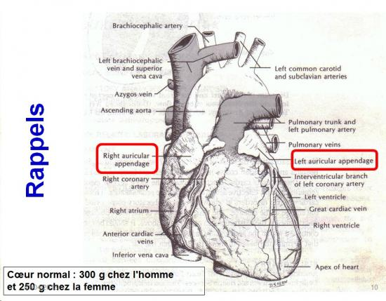 Marqueurs cardiaques 1