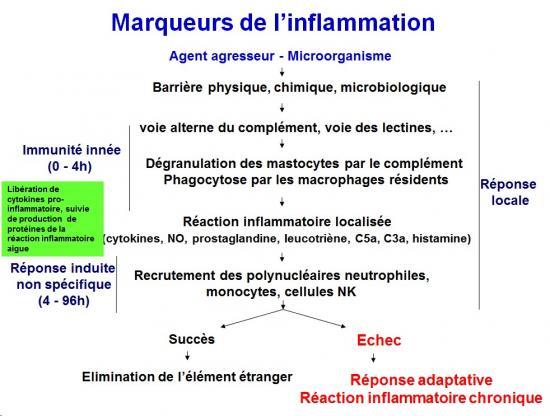 Marqueurs de l'inflammation 1