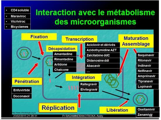 Mécanismes d'action des médicaments 11