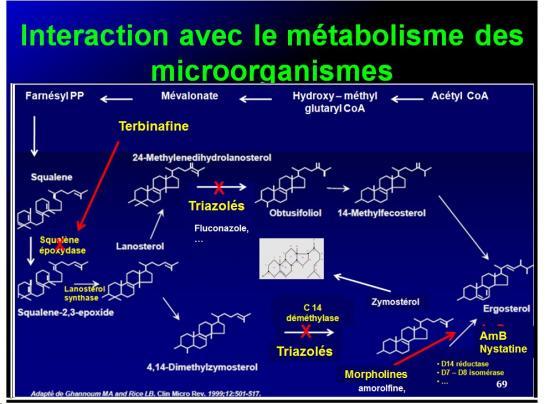 Mécanismes d'action des médicaments 12