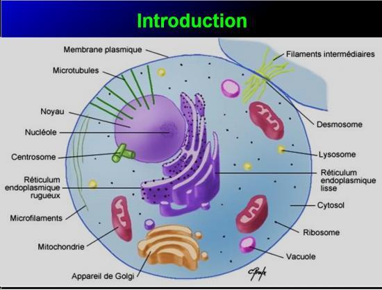 Mécanismes d'action des médicaments 2