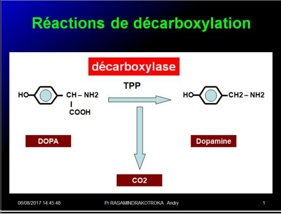 Métabolisme des médicaments 10