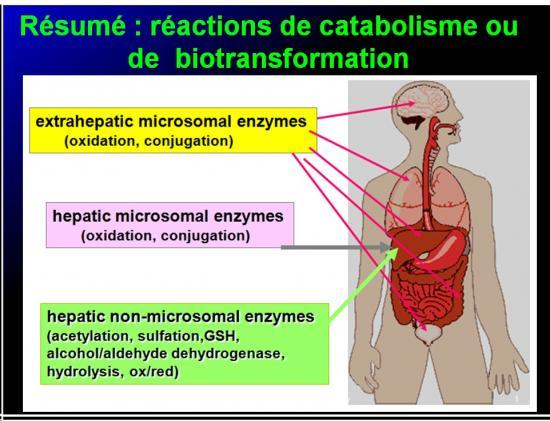 Métabolisme des médicaments 12