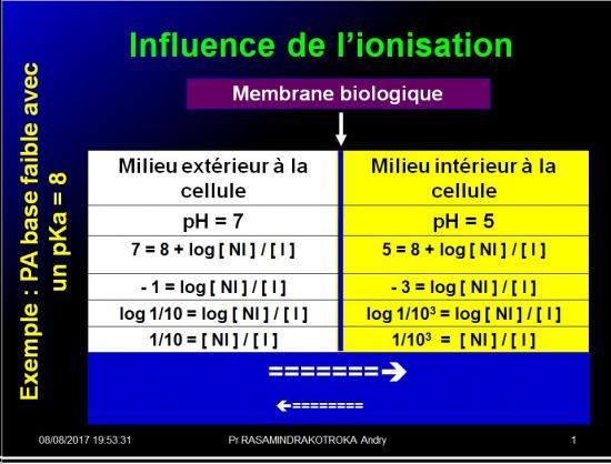 Modalités de passage des médicaments à travers membrane biologique et épithélium 11