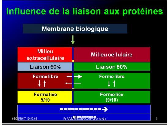 Modalités de passage des médicaments à travers membrane biologique et épithélium 13