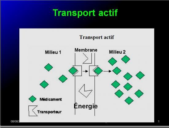 Modalités de passage des médicaments à travers membrane biologique et épithélium 15