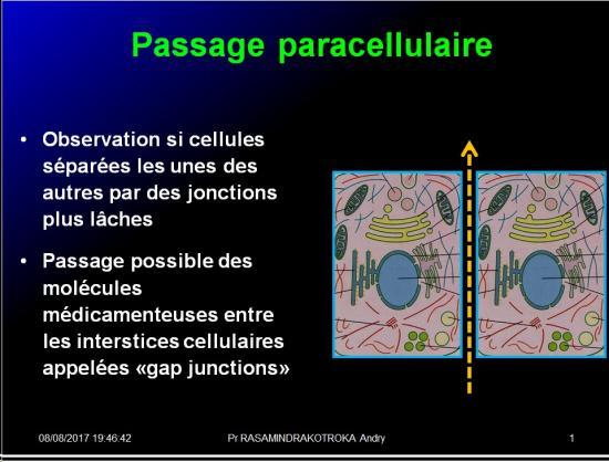 Modalités de passage des médicaments à travers membrane biologique et épithélium 3