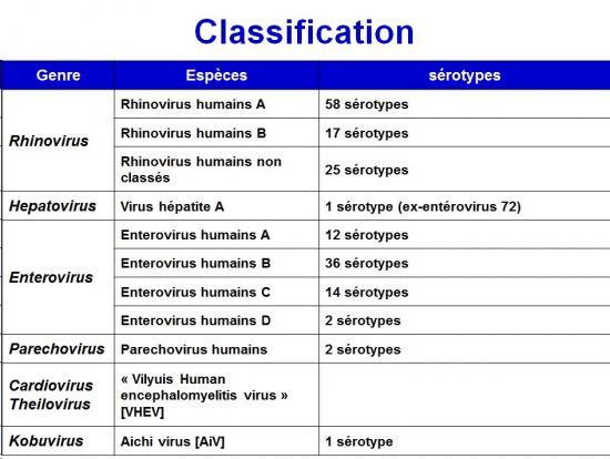 Picornaviridae (1)