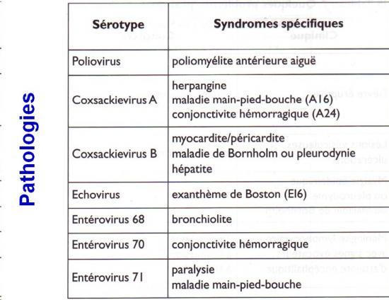 Picornaviridae (11)