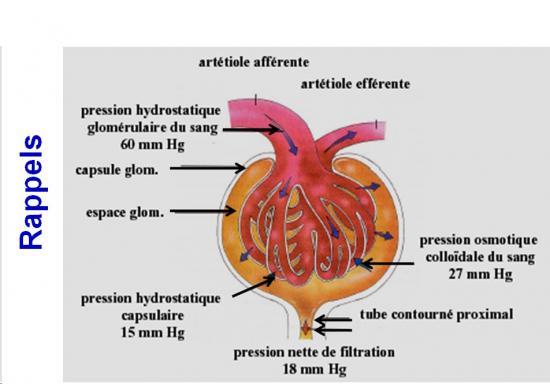 Protéines urinaires 6