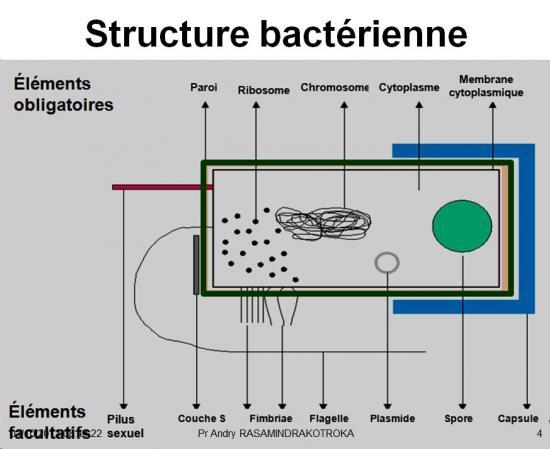 Rappels sur les bactéries 2