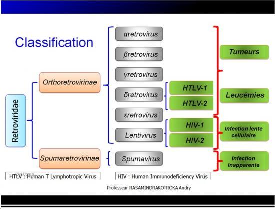 Retroviridae et infections par HTLV et VIH1