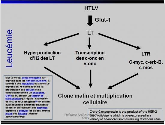 Retroviridae et infections par HTLV et VIH 32