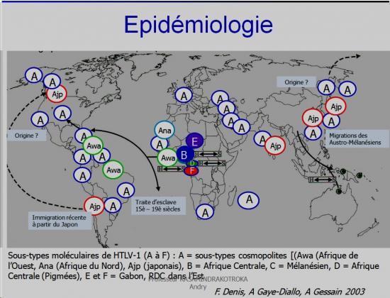 Retroviridae et infections par HTLV et VIH 36