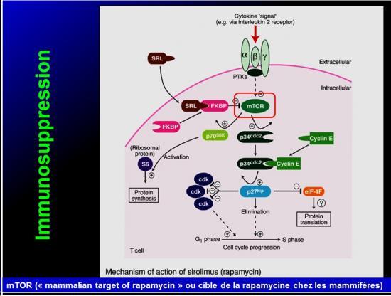 Système immunitaire et xénobiotiques 10