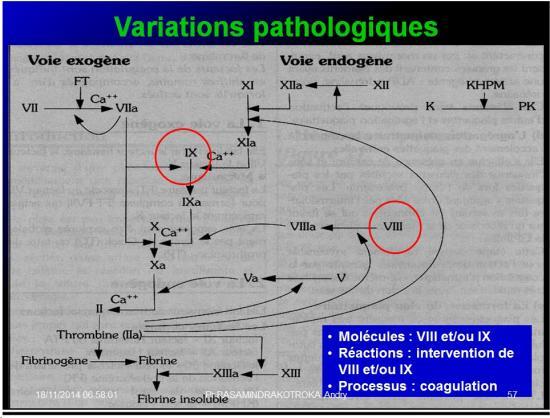 Variable - variabilité23